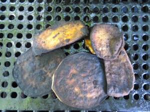 Gently Darkened Sweet Potato