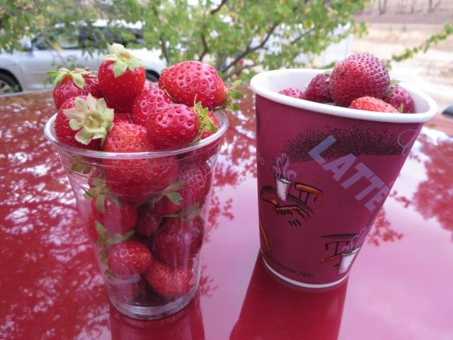 Terra Firma Strawberries